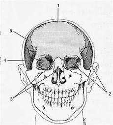 Sahabat Afterego Anatomi Fisiologi Cranium