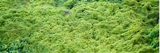 Moos Im Rasen Entfernen Tipps Entmoosen Bek 228 Mpfen