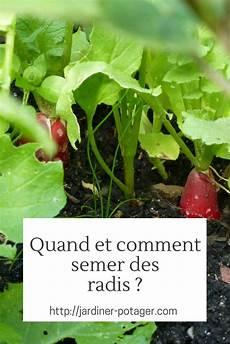 semer des radis m 233 thode et conseils pour r 233 ussir vos
