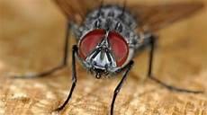 chasser les mouches 10 trucs de grand m 232 re pour chasser les mouches de la maison