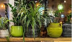 Luftreinigende Pflanzen Schadstoffe Los Werden Herold At