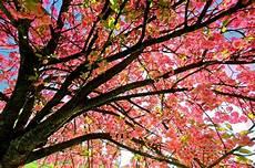 carnet de printemps les plus belles images de printemps printemps sous le