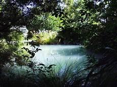 a beautiful water garden funnilogy