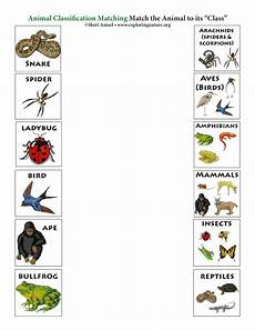 nature and animals worksheets 15101 match the animals to their class