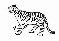 Contoh Gambar Gambar Mewarnai Hewan Harimau Kataucap