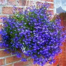 piante fiorite perenni il giardino sfumato fiori da appendere