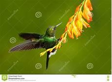 Malvorlage Vogel Mit Blume Vogel Mit Orange Blume Fliegenkolibri Kolibri In Der