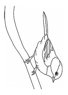 birds coloring pages index