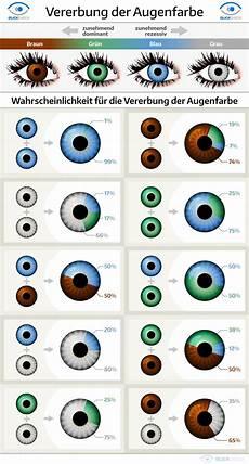 vererbung der augenfarbe biologie eye facts e