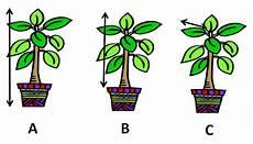 plants measurement worksheets 13586 investigating plant growth worksheet edplace