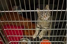 gabbie animali gabbie per gatti le migliori e offerte 2019