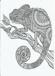 Www Ausmalbilder Info Malbuch Malvorlagen Tiere Chameleon Coloring Page Kostenlose Erwachsenen