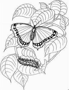 Ausmalbild Schmetterling Und Raupe Schmetterling Und Raupen Ausmalbild Malvorlage Tiere