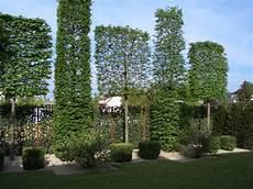 baum kleiner garten hainbuche spalierb 228 ume идеи для сада garden design