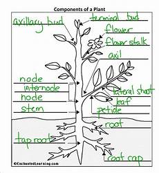 plant structure worksheet miss jeffrey s sbi3c may 2012