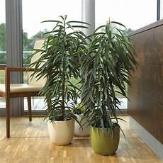 Pflanzen Laukart Hilden Ihr Pflanzencenter F 252 R