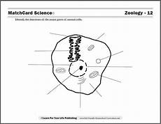 animal cell worksheets 14058 zoology curriculum