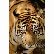 Wildlife Topics | wildlife speech topics synonym