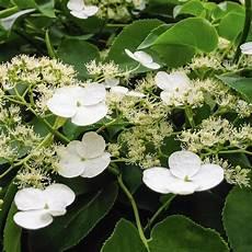 plante d ombre liste ooreka