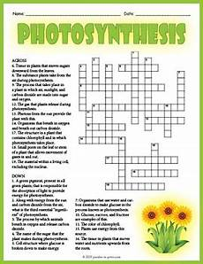 photosynthesis crossword puzzle by puzzles to print tpt