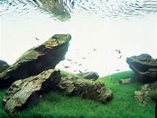 amano aquascape 1000 images about iwagumi on