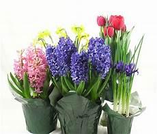 fiori bulbo bulbo pollicegreen