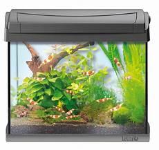 tetra aquaart garnelen aquarium 20l olibetta