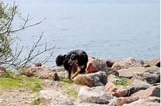 mit hund urlaub mit hund am see ferien am wasser