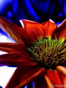 fiori e fiori immagini gratis nel web fiori bellissimi unici e