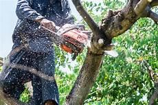 Prix Elagage Cerisier Platinum Lawn Service Lawn Care Spraying Fertilization