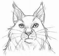 Katzen Ausmalbilder Warrior Cats Frischbeute Katzenzeichnen Und Mehr 187 Warrior Cats