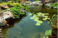 the benefits of aquatic plants and water garden