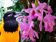 simbolo naturales de merida venezuela celebra d 237 a del turpial y la orqu 237 dea como s 237 mbolos naturales 218 ltimas noticias