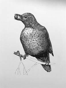 5000 Gambar Burung Dari Pensil Gratis Gambar Id