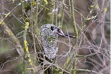 welcher vogel baut welches nest nistmaterial im garten was sie anbieten k 246 nnen lbv