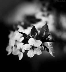 noir et blanc noir et blanc