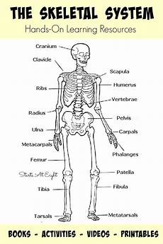 science worksheets human skeleton 12216 the skeletal system on learning resources human homeschool skeletal system
