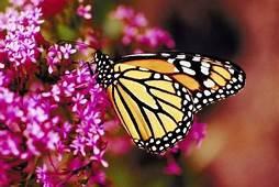 Shade Tolerant Perennials That Attract Birds & Butterflies