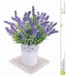 Topf Mit Dem Lavendel Lokalisiert Auf Einem Wei 223 Stockfoto