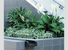Indoor plants for cleaner air   Landscape Ontario