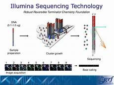 illumina ngs sequencing illumina shining a light on your dna technology and