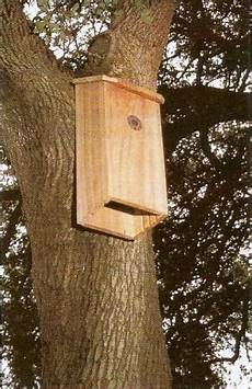 bat conservation international bat house plans build a bat house for natural pest control mother earth