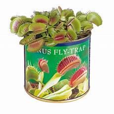 fleischfressende pflanze fleischfressende pflanze