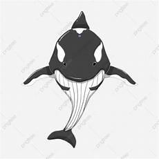 Gambar Ikan Paus Kartun Hitam Putih Gambar Ikan Hd
