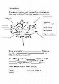 photosynthesis worksheet teaching resources
