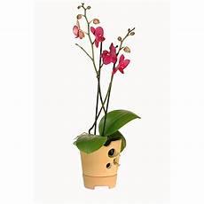 shop bundladen pflanztopf f 252 r orchideen kaufen