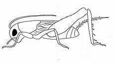 insekten malvorlagen malvorlagen1001 de