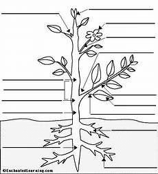 label flowering plant anatomy glossary enchantedlearning com
