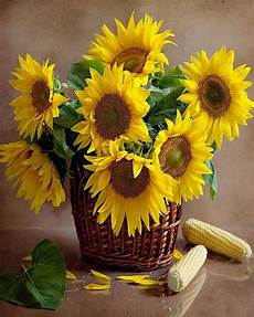 bouquet de tournesol fleurs bouquets tournesol fleurs fleurs