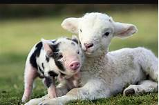 farm animals list facts and pictures